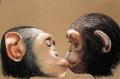 les singes de claire-pastel